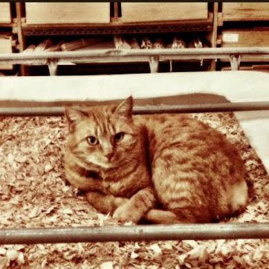 The Foreman - Bateaux Tirot's cat