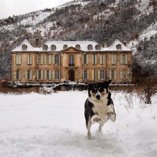 Chateau de Gudanes and their dog